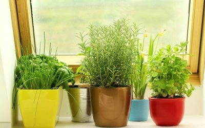 Growing Your Indoor Garden
