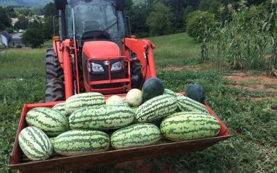 Watermelon Season at Open Spigot