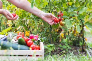 fresh fruits and vegetable for garden recipes